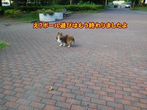 20120916_8.jpg