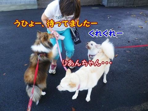 20120917_2.jpg