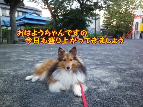 20120930_1.jpg