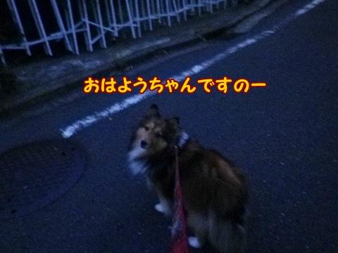 20121103_1.jpg