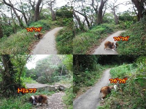 20121103_1_8.jpg