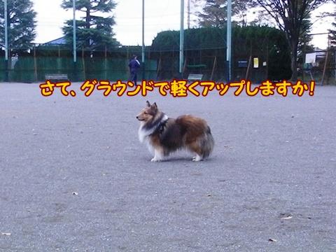 20121103_4.jpg