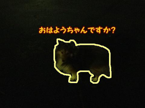 20121107_1.jpg