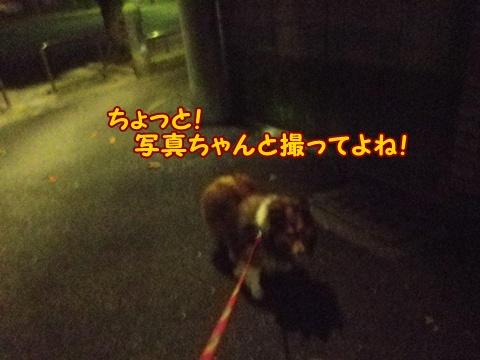 20121107_2.jpg