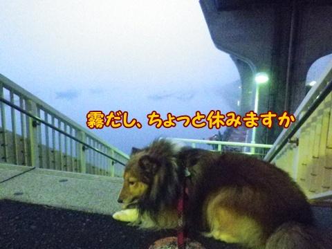 20121107_5.jpg