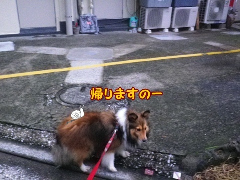 20121107_8.jpg