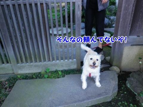 20121110_2.jpg