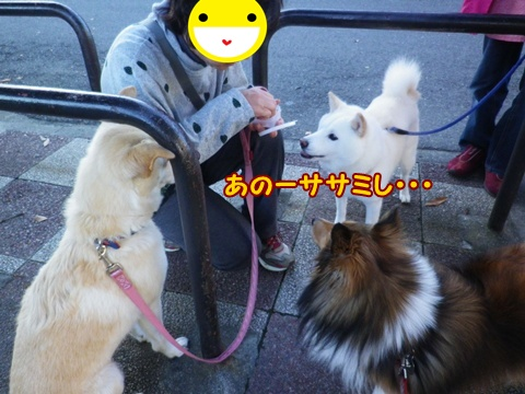 20121110_5.jpg