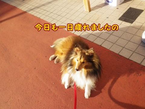 20121110_7.jpg