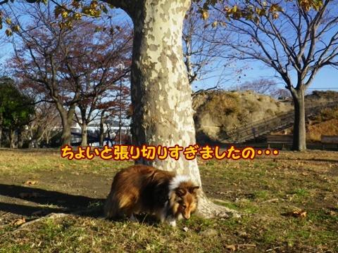 20121125_7.jpg