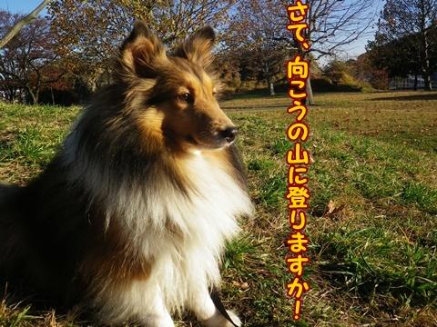 20121125_9.jpg