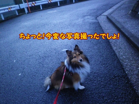 20121206_3.jpg