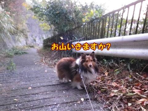 20121207_4.jpg