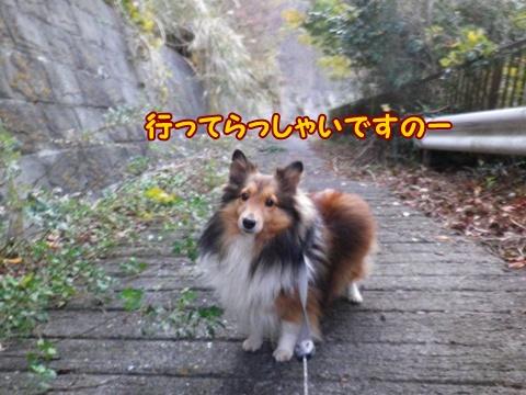 20121207_5.jpg