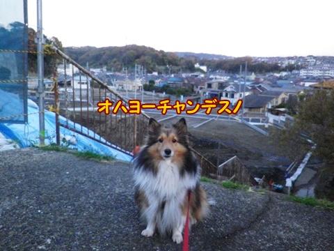 20121208_1.jpg