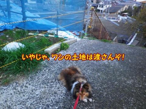 20121208_2.jpg