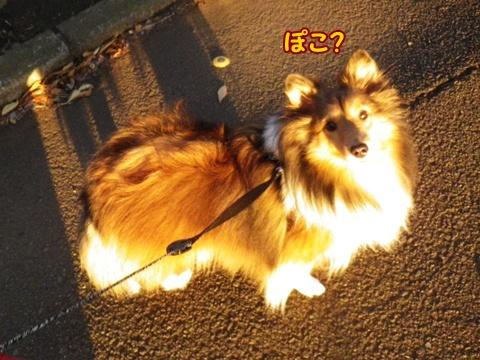 20121208_8.jpg