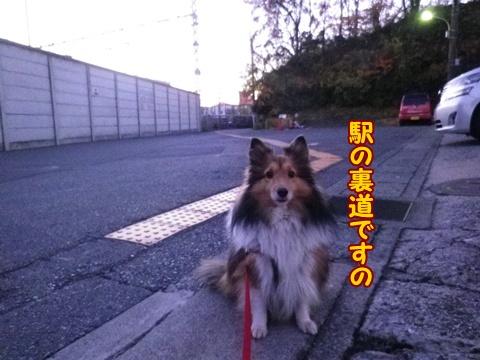 20121212_1.jpg