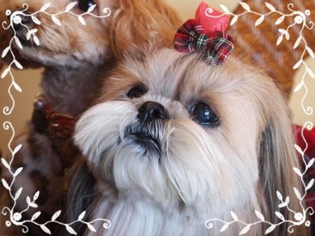 20111217クリスマス会 2