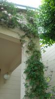 木々花花3