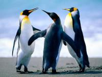 Penguins_convert_20120430010301.jpg