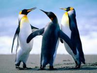 Penguins_convert_20120430010301.jpg