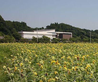 掛川市ヒマワリ畑-1