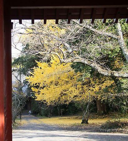 蓮永寺の銀杏-1