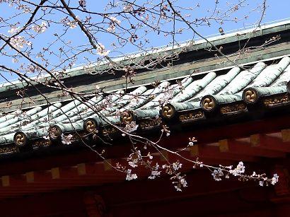 静岡浅間神社内の桜-2