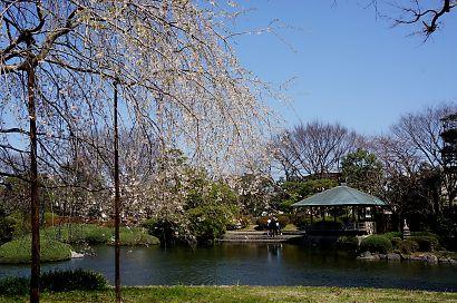 枝垂桜咲く城北公園-3