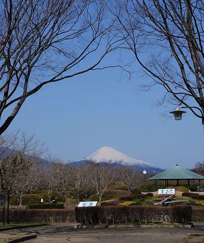枝垂桜咲く城北公園-1