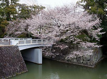 桜咲く駿府城公園-5