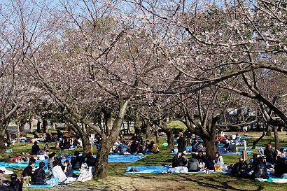 桜咲く駿府城公園-4