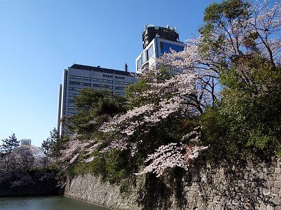 桜咲く駿府城公園-1