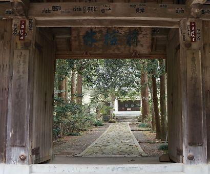 増善寺の御衣黄-1