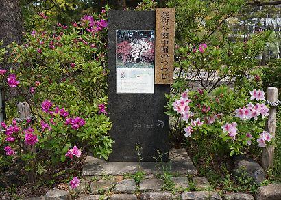 駿府城公園サツキ-5