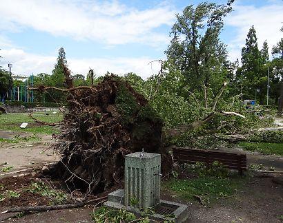 公園に台風4号-4