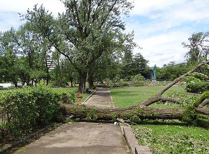 公園に台風4号-3