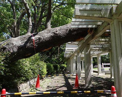 公園に台風4号-2