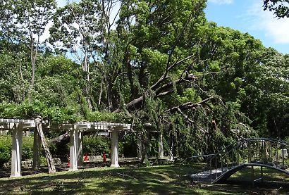 公園に台風4号-1