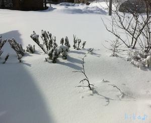 真冬の庭♪
