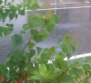 2週間ぶりの雨!!