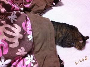 ネコはコタツで・・・(=^・^=)