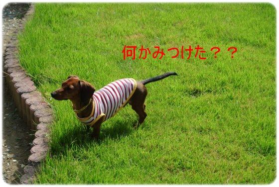DSC_6220.jpg