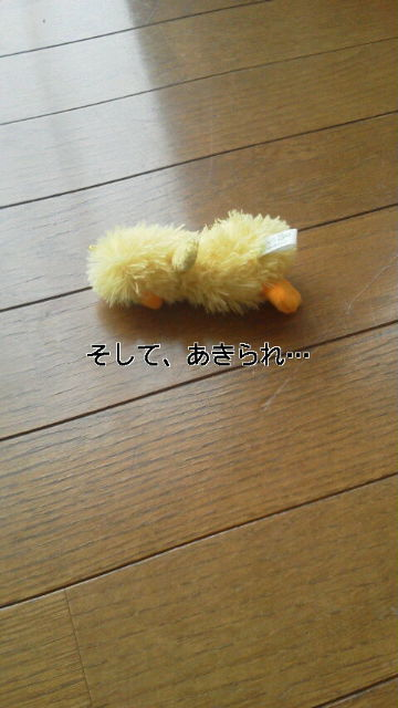 20120607100611.jpg