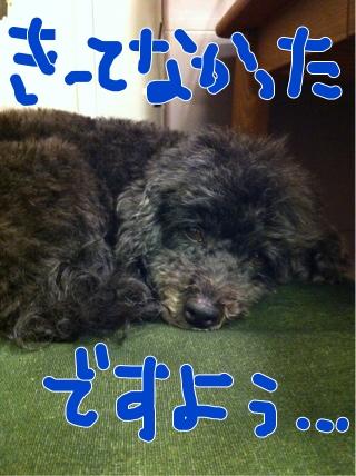 iphone_20111127202301.jpg