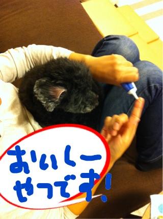 iphone_20111127202823.jpg