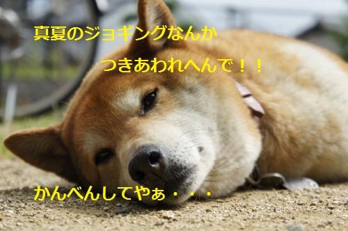 DSC01007_20120526172856.jpg