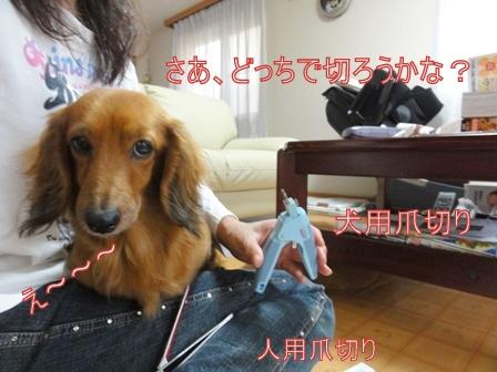 DSC01579a.jpg