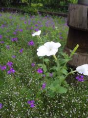nakkuのお庭